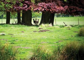 Sherwood-Hideaway-Lodges