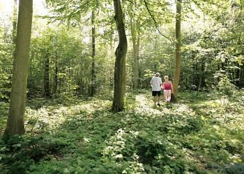 Deerpark-Forest